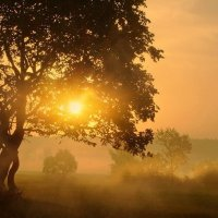 Где стелется туман в долине сонной.... :: Александр | Матвей БЕЛЫЙ