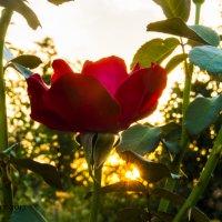 В лучах заката... :: ФотоЛюбка *
