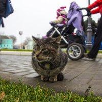 Дворовый кот :: Aleksey Donskov