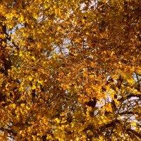 Осень :: Аленушка Ерош