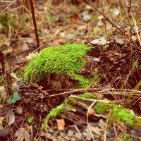 Осень в лесу... :: Юлия М