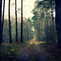Таинственный  лес :: Юлия М