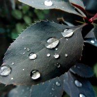 После дождя... :: Татьяна Наркевич