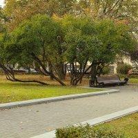 Дерево. :: Nonna