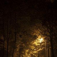 ночные прогулки :: Игорь Базуев