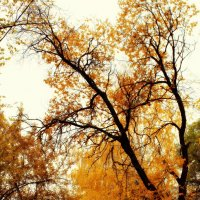 Уж небо осенью дышало :: Ильгам Кильдеев