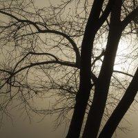 утренний туман :: Игорь Базуев