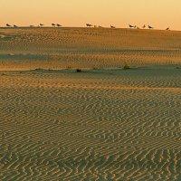 Утренняя дюна :: Владимир Самсонов
