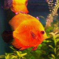 Красавица из океанариума :: Наташа Рыбакова