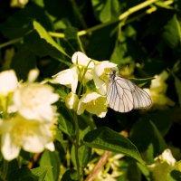 Летний сад :: Евгений Barash