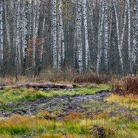 На лесной опушке . :: Алла Мещерякова
