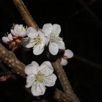 Весна :: Ирина Синельникова
