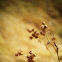Ноябрь на дворе :: Светлана