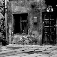 Маленькая жизнь одного двора :: Ольга Мальцева