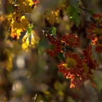 Краски осени.. :: ФотоЛюбка *