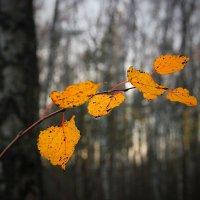 Листья желтые :: Victor Klyuchev