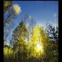Утро в осеннем лесу :: Владимир Захаров