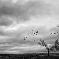 Сломанное дерево :: Марат Закиров
