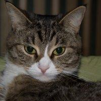 кошка :: Кирилл ICQ