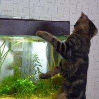Классика: кошка и аквариум - 3 :: Владимир Мишин