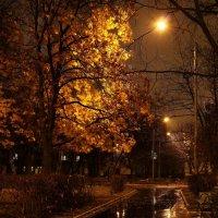 Дорожка в осень :: Владимир Чернов