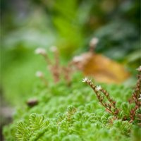 Маленький зеленый мир :: Юлия Глазунова