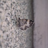 Бабочка :: Иван Перенец