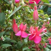 Просто цветы :: Татьяна Рябинина