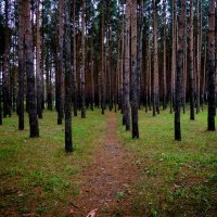 Загородный Парк :: Ирина Выборнова