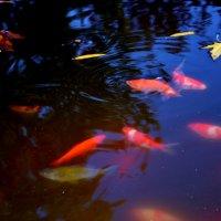 волшебные рыбки :: Дарья Довгопольская
