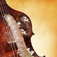 В прошлой жизни, она была Antonio Stradivari) :: Анна Чернобай
