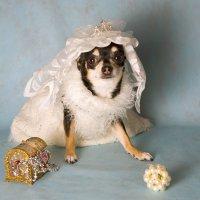 невестушка :: Алина Гилёва