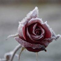 После мороза :: Татьяна -
