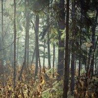 Краски осени.Дымка в лесу. :: Сергей Калиновский