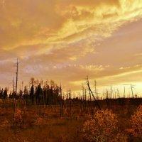 Уж небо осенью дышало. :: игорь шемелов