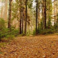 В лесу :: Юрий Данилов