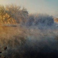 Игра январского тумана :: Александр   Матвей БЕЛЫЙ