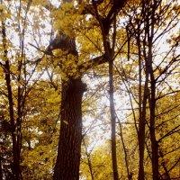 Осень-чудесная пора!) :: Lyba Schlepova