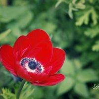 Цветок. :: Lyba Schlepova