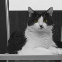 Мой любимый кот :: Яна Шмелёва