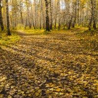 Осень :: Юрий Гурьев