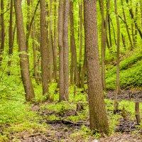 Лес, лесок.. :: Яна Шмелёва