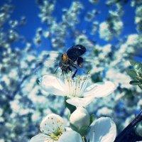 Пчела :: Аленушка Ерош