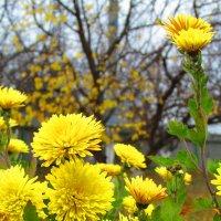 осенние цветы :: Marina Timoveewa