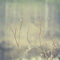 New Life :: Александр Лежнев