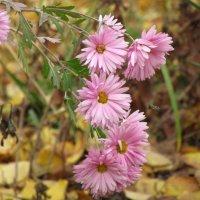 пчёлка летит к цветам :: Marina Timoveewa