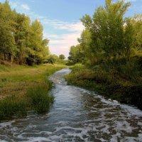Река Мечётка :: Dr. Olver