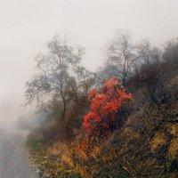 Вечерний туман :: viton