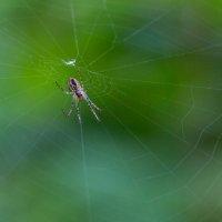 паук :: Alexsei Melnikov