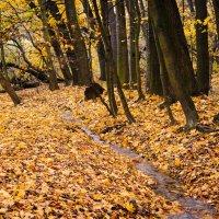 Ручей в осеннем лесу :: Valeria Ashhab